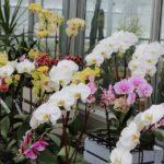 Como cuidar de Orquideas deixando florida o ano tudo