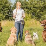 treinamento pratico ensina como educar cães