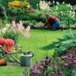 Curso básico de jardinagem quase de graça / dedo verde