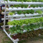 Curso ensina cultivar horta orgânica em vaso ou canteiro