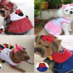 Curso online ensina como fazer roupas para PET/Gatos