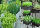 Curso de horta orgânica em vasos e canteiros